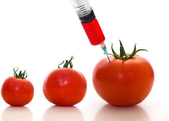 1c23a76e014a24ba0e49c71605514d04 Spaniard Died From Allergic Reaction After Eating GMO Tomatoes With Fish Genes!