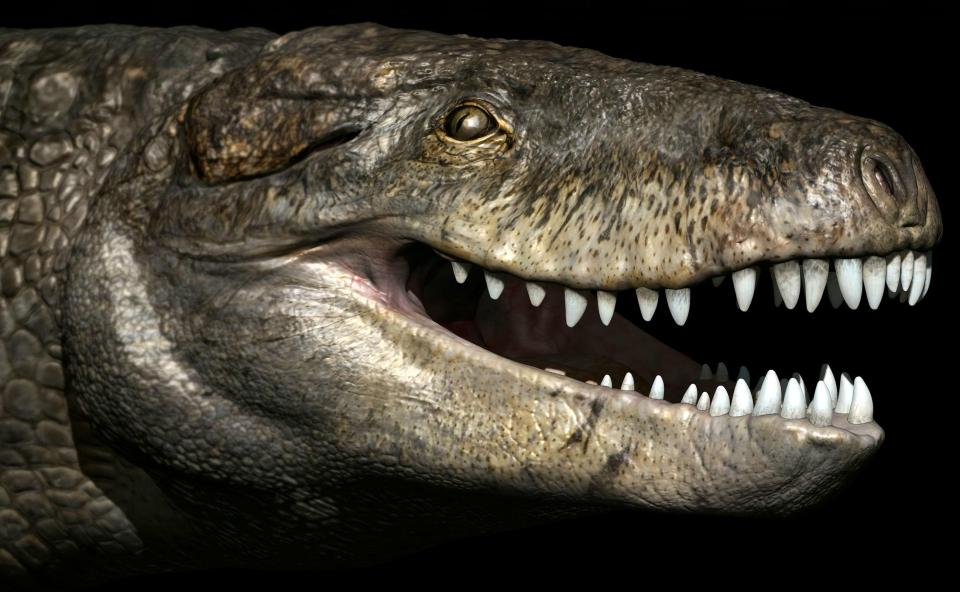 e80699cd689aeba9c9af13a017e4f614 Terrifying ancient giant crocodile was 24 feet long with teeth as sharp as a T-Rex's
