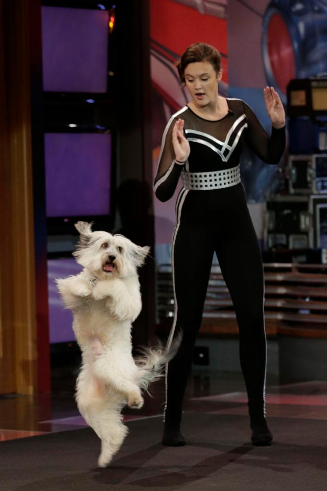 f246e6dae58f9fb2dc4039e60b0d8b43 Britain's Got Talent star Pudsey the dog dead after heartbreaking battle with leukaemia and was looking into Ashleigh Butler's eyes as he was put down