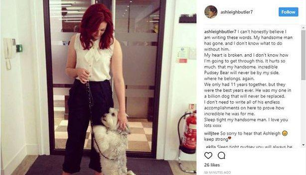 f8402315db4165438f1a15b5d223d20e Britain's Got Talent star Pudsey the dog dead after heartbreaking battle with leukaemia and was looking into Ashleigh Butler's eyes as he was put down
