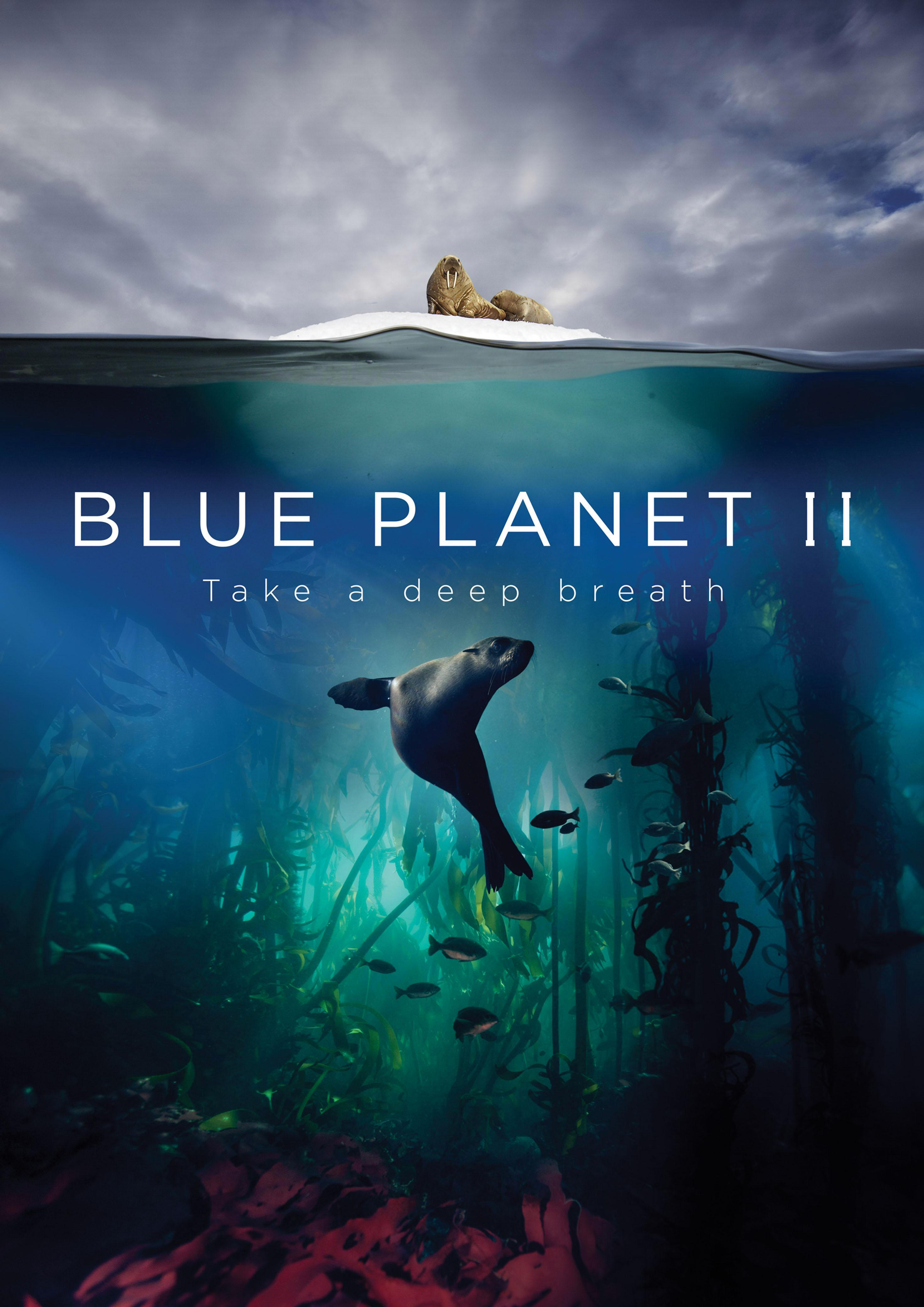 cea33b66b4ba8701786af4bc23838853 What are the giant trevally, Asian sheepshead wrasse, mobula ray, fangtooth and zebra mantis? All about the Blue Planet II sea creatures