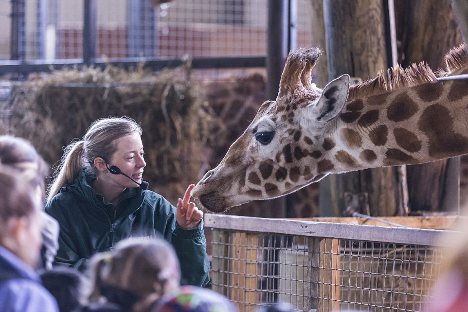 b8aa4cd9f2a08e3b3a5aeb35b2c43894 Ever wanted to be 18 feet up and face-to-face with a giraffe...? Then Marwell Zoo in Hampshire - with 1,200 animals and its new £8million tropical rain forest house - is the perfect family day out for you